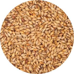 Biscuit Malt Image