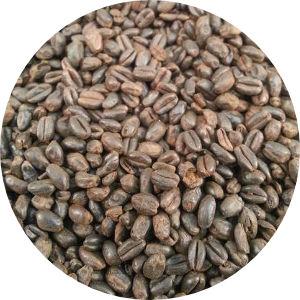 Roasted Wheat Image